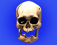 Cráneo de museo