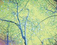Magnolia (Green)