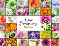 Cees van Starkenburg B.V Banners
