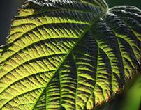 Iluminación natural / Light & Leaves