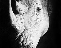 Rhino Spotlight