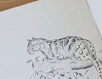 Extinct   Illustrated Booklet