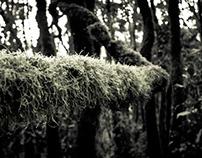 Reserva La Floresta