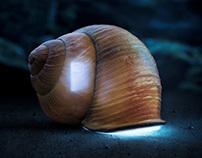 Snail / Turtle