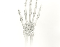 Hand Bone Illustration