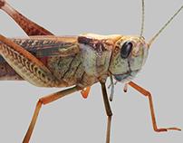 3DCG Bugs - Milan Expo 2015