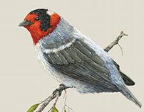 Bird Spot Illustrations
