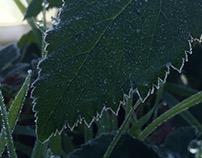 Willamette Winter