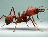 CG ANT (Atta laevigata).