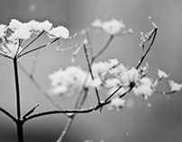 [Russian seasons] photo