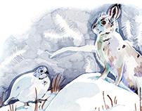 BBC Wildlife Illustrations