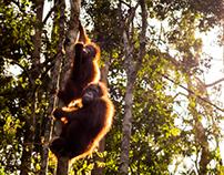 Nature of Borneo