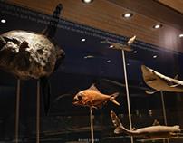Mar de l'Ebre Museum