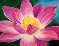 Lotus in colored pencil