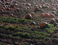 Pumpkin Farm by Richard Lazzara