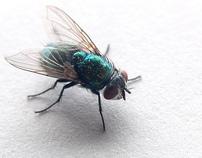 When Not If - Flies
