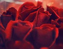 Rosas Don Eloy