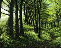 Forest studies