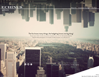 Echinus Partners Website Design