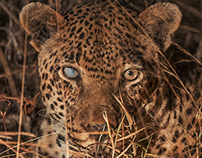 Wildlife In Nature | Sabi Sabi