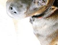 Daisi's Portrait