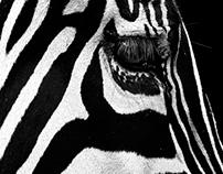 Portraits of Animals II