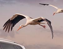 VW Storks