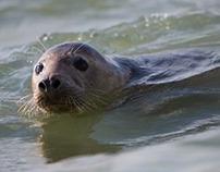 Seals on Horsey Beach, Norfolk