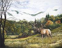 Morning in the Valley: Elk in Cataloochee Valley
