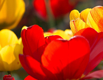 VIRÁGUDVAR (floral garden)