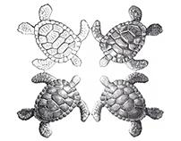 Turtle Together