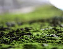 Little Details Of Nature