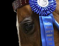 Arabian Horse Club of CT. Annual 'A' Show 2013