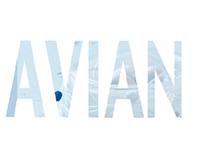 Avian ICU Mailer
