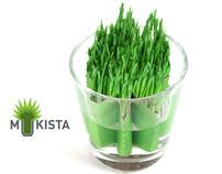 Mukista - Concept for planting