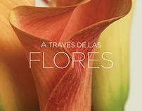 """Editorial """"A través de las flores"""""""