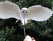 Hand made Barn owl sculpture