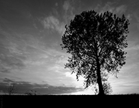 My favorite tree (NL)