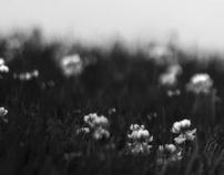 photos: illusion of time