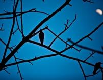 Birds Insomnia
