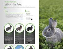 Viedenský králik /Viennese rabbit