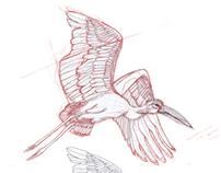 Character design: stork