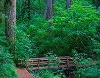 Northwest Forests