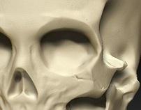 ZBrush Skull