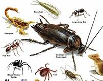 http://alaamiah.com/blog/spraying-pesticides-w8