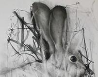 Rabbit...2014