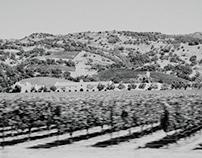 Napa Valley, USA 2012