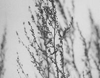 XI (spring)