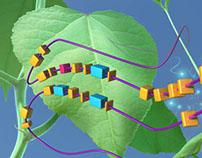 populus genetics
