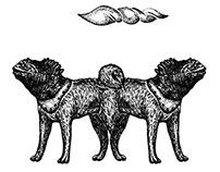 Iguana emblem